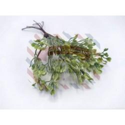 Ramoscello Hoya a cuoricini verde